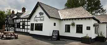 The Dog and Bull photo